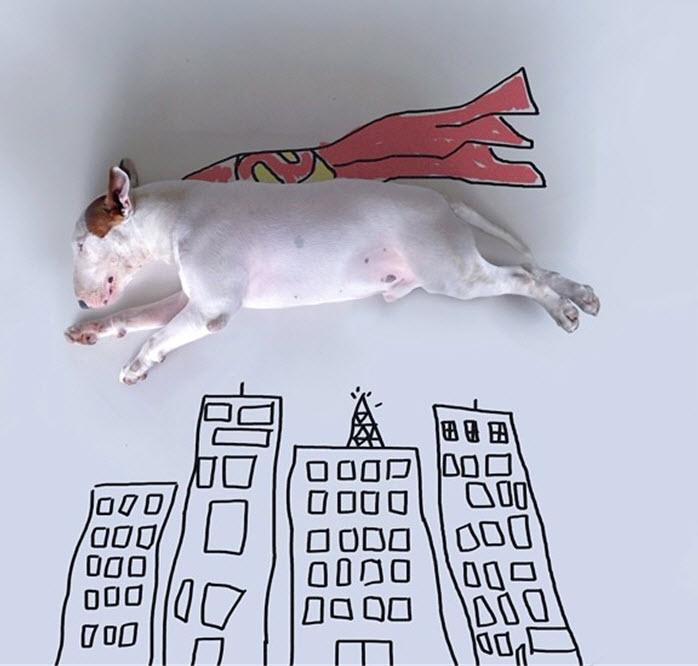 Bull Terrier flying