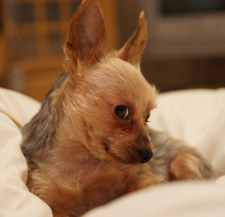 love life doggy